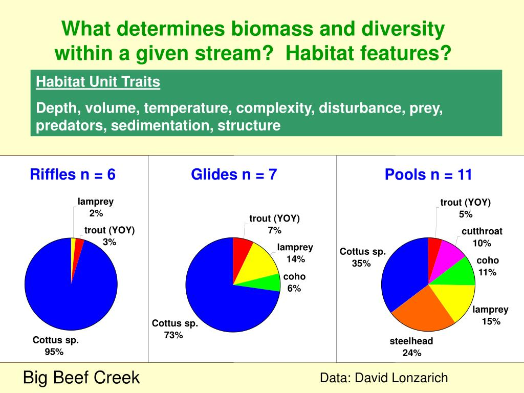 What determines biomass and diversity within a given stream?  Habitat features?