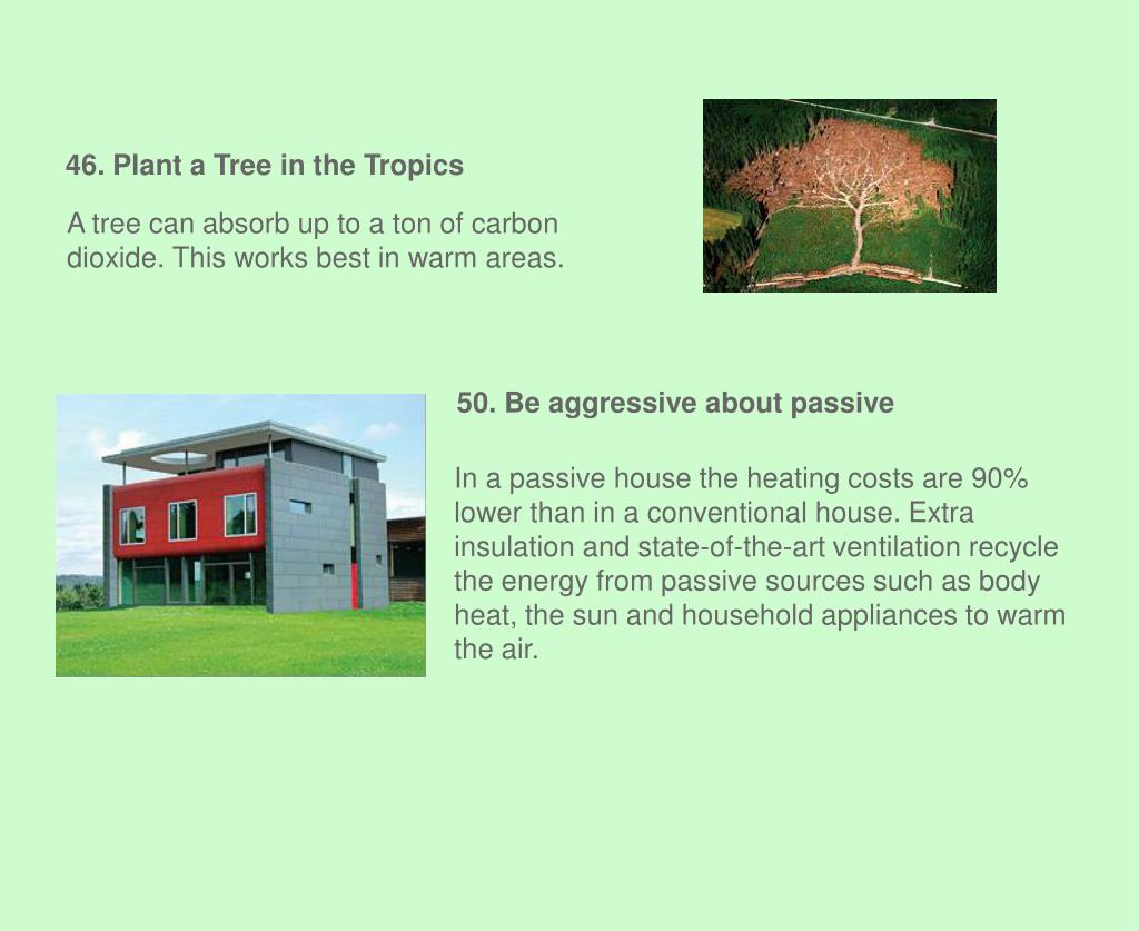 46. Plant a Tree in the Tropics