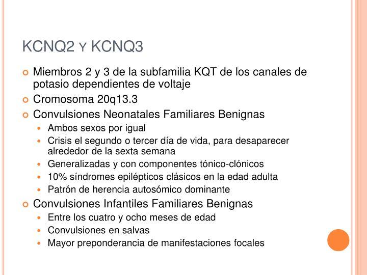 KCNQ2 y KCNQ3