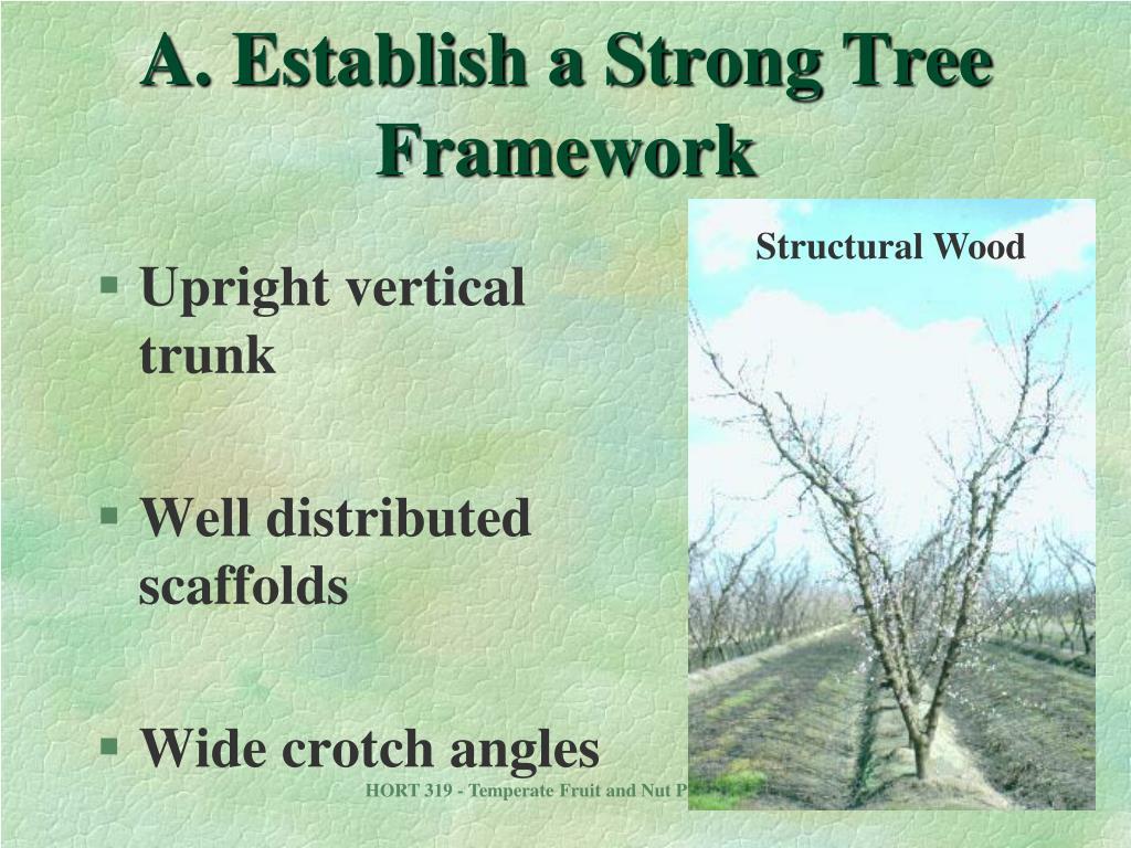 A. Establish a Strong Tree Framework