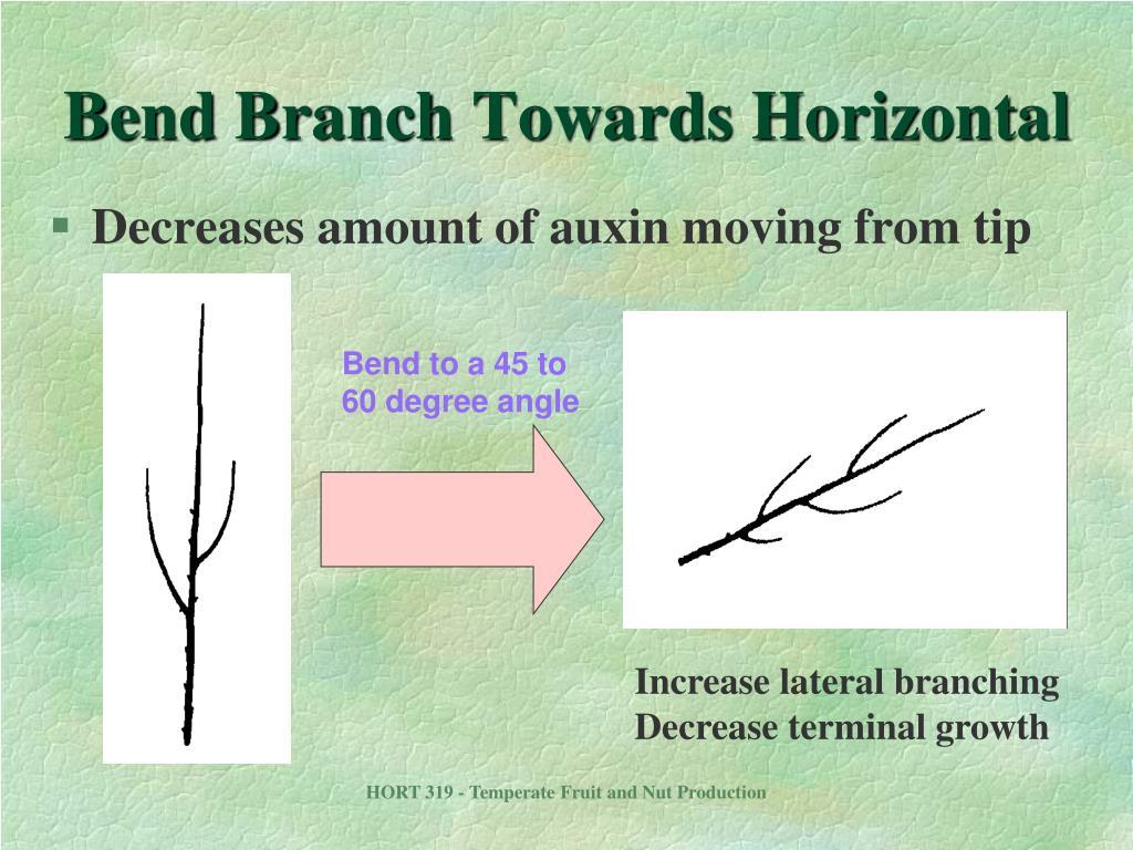 Bend Branch Towards Horizontal