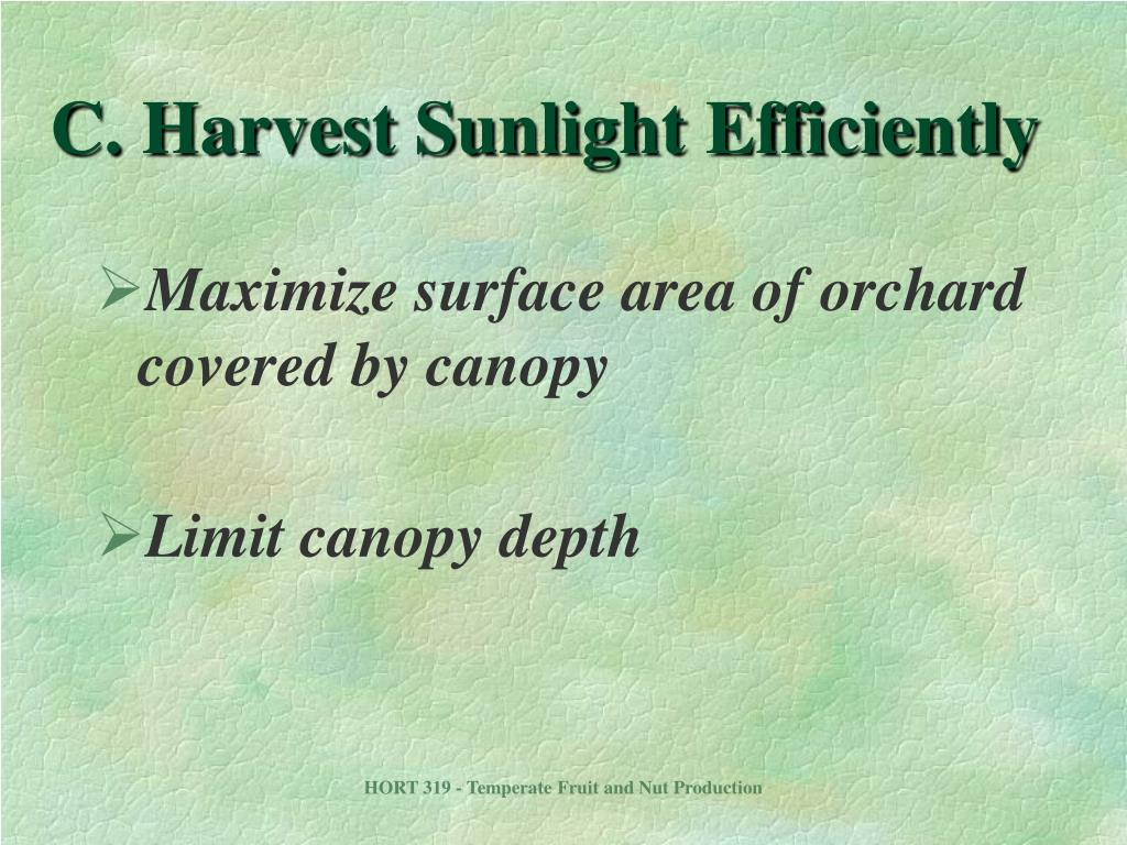 C. Harvest Sunlight Efficiently