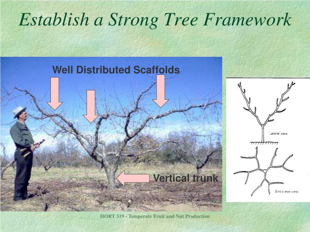 Vertical trunk