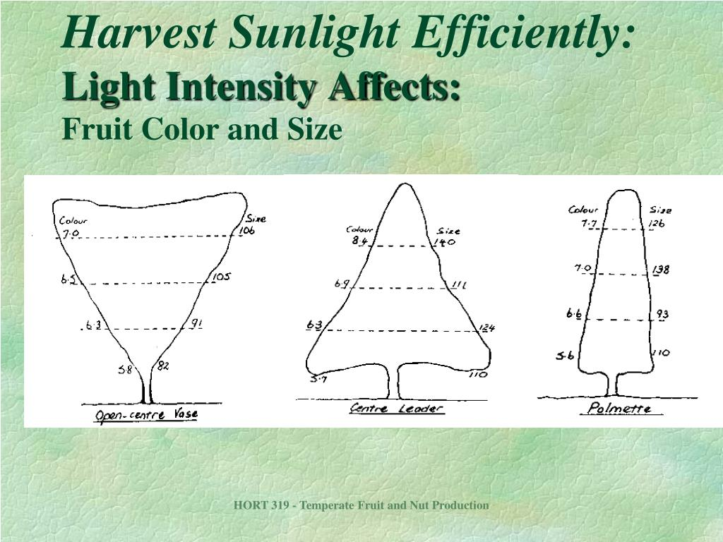 Harvest Sunlight Efficiently: