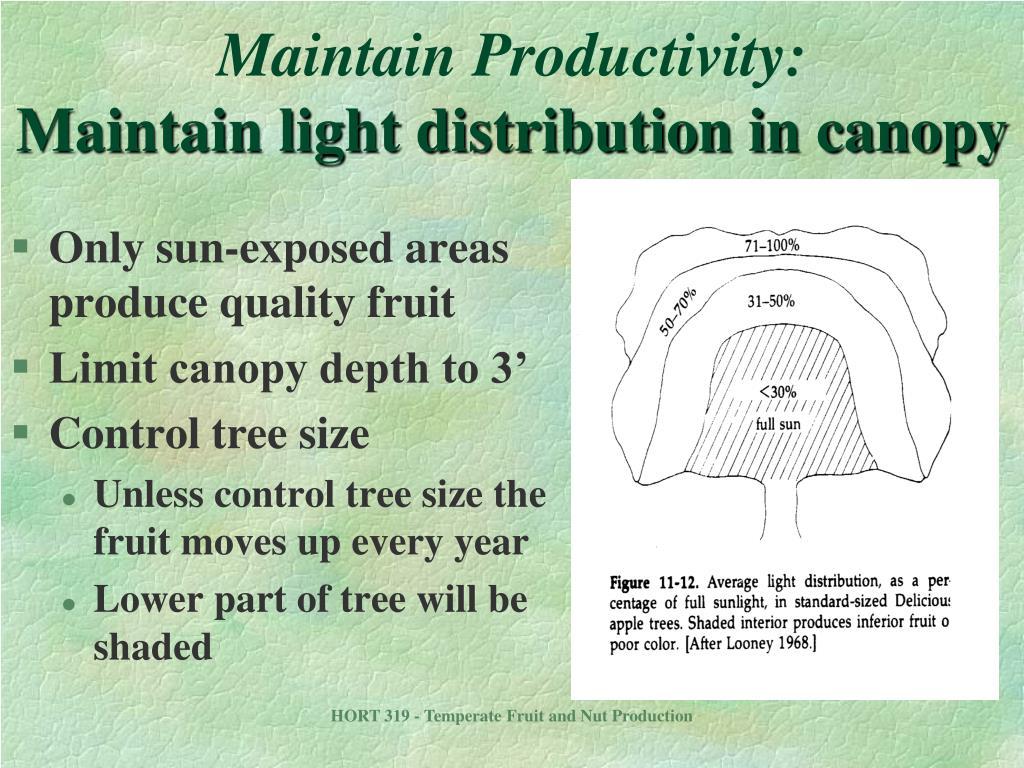 Maintain Productivity: