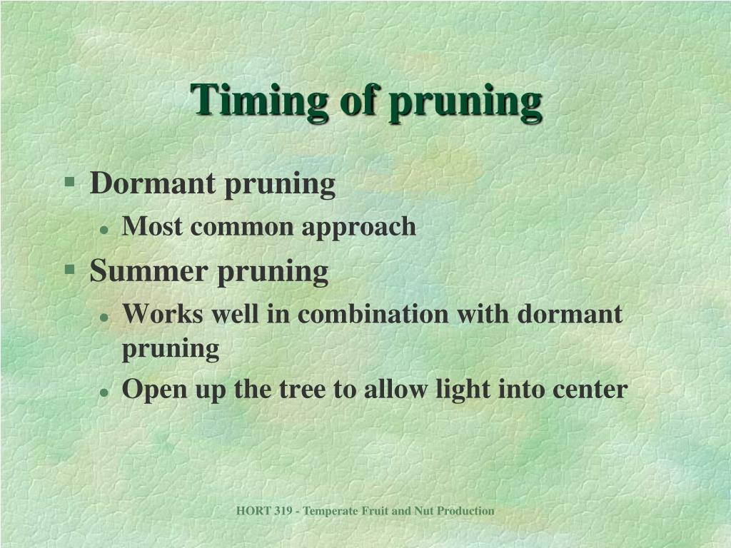 Timing of pruning