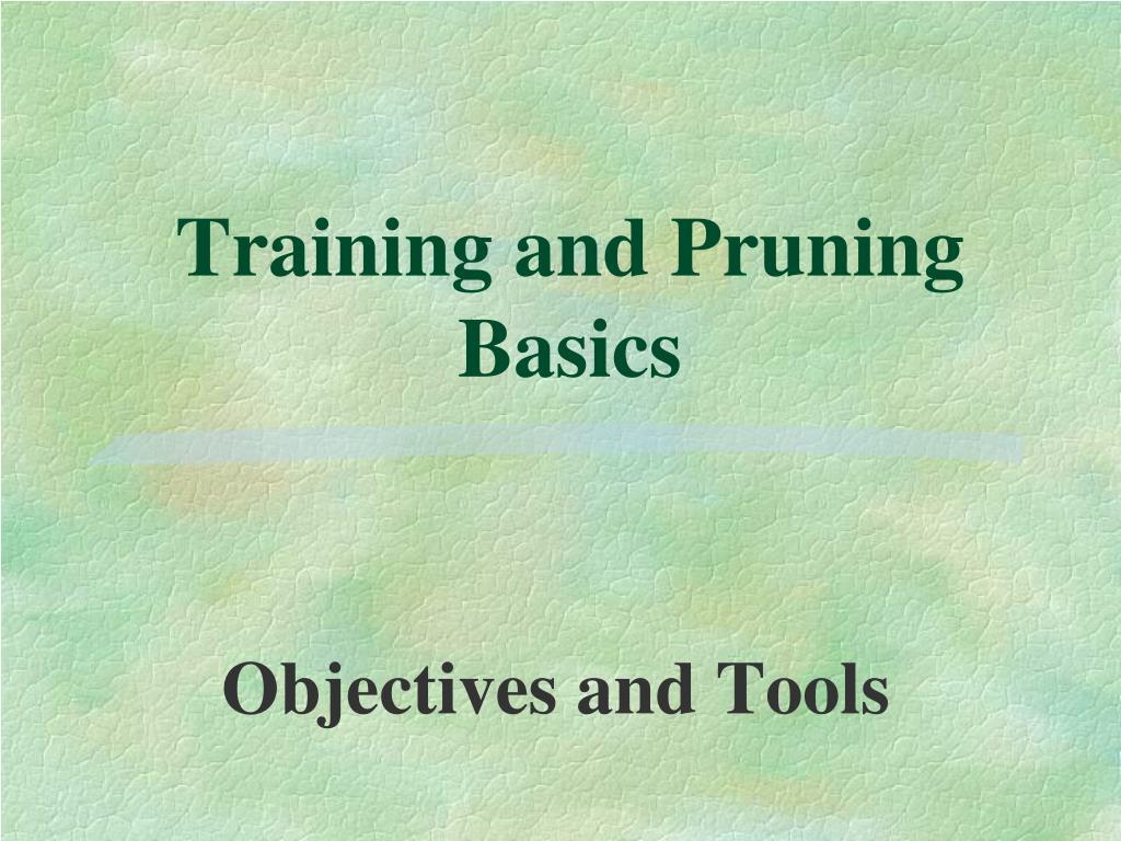 Training and Pruning Basics