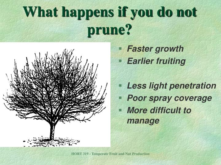 What happens if you do not prune