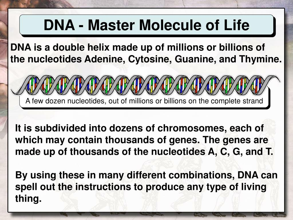 DNA - Master Molecule of Life