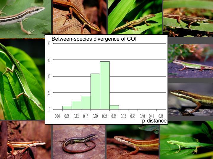 Between-species divergence of COI