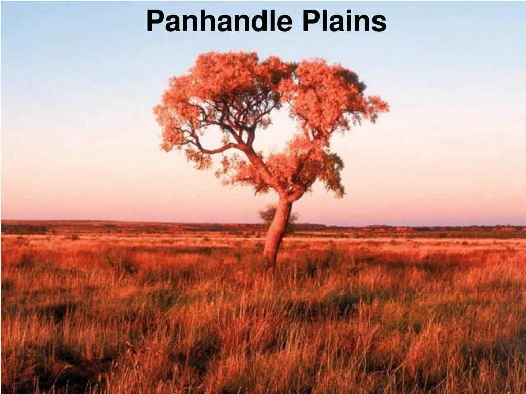 Panhandle Plains