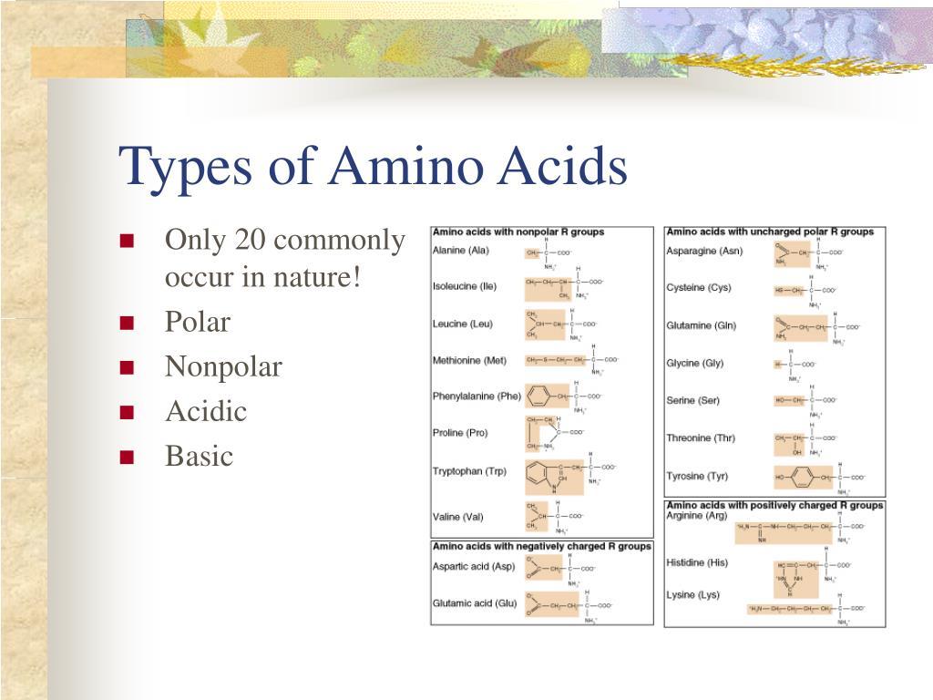 Types of Amino Acids