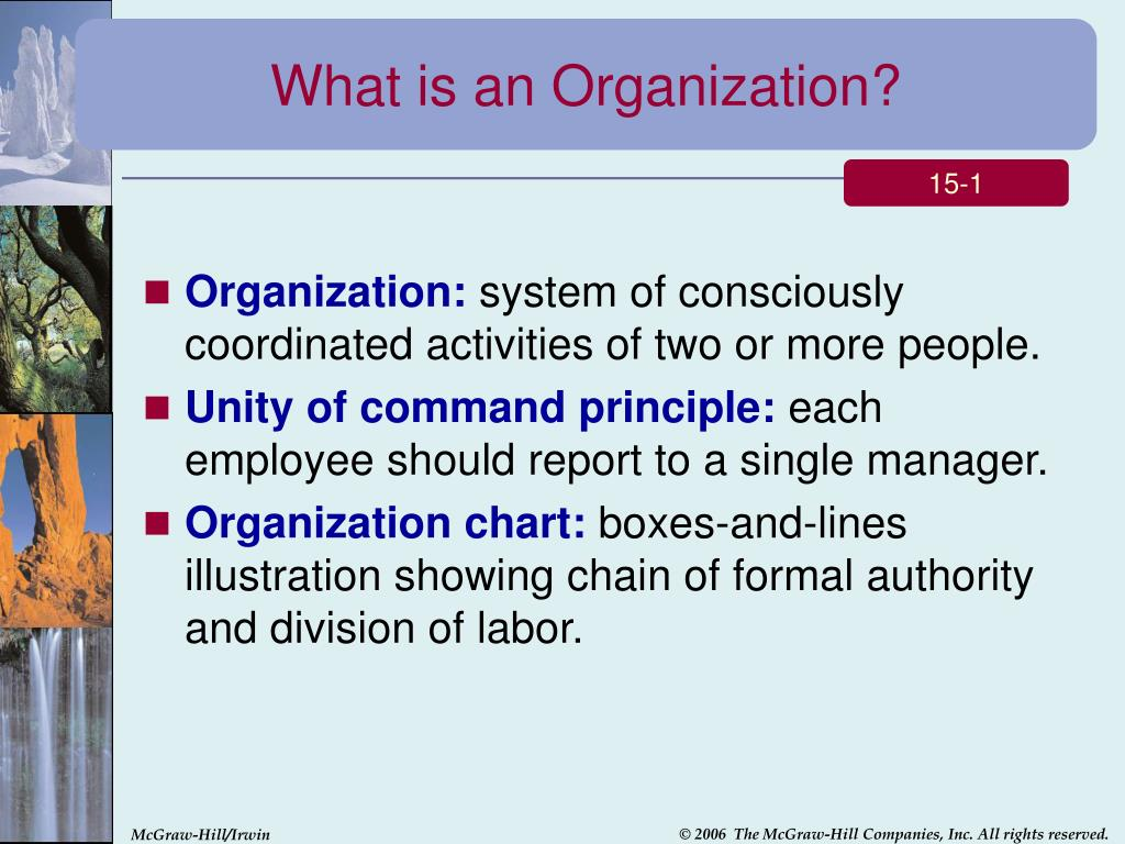 What is an Organization?