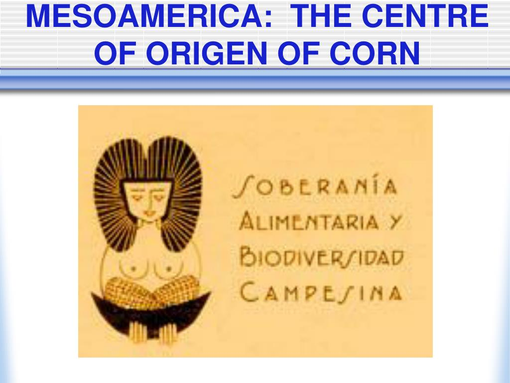 MESOAMERICA:  THE CENTRE OF ORIGEN OF CORN