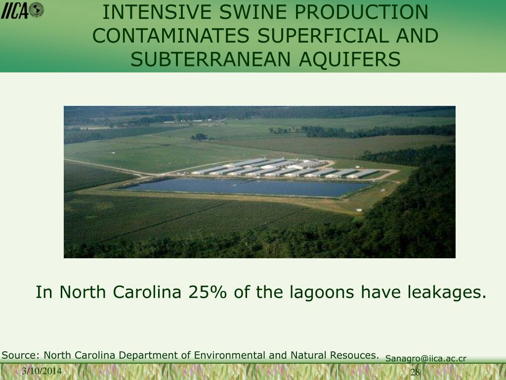 INTENSIVE SWINE PRODUCTION CONTAMINATES SUPERFICIAL AND SUBTERRANEAN AQUIFERS