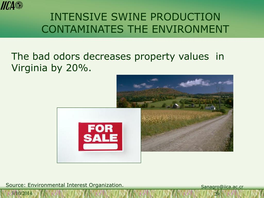 INTENSIVE SWINE PRODUCTION CONTAMINATES THE ENVIRONMENT