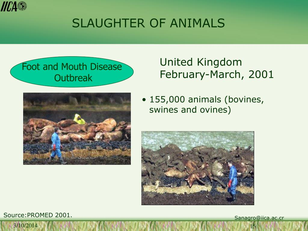 SLAUGHTER OF ANIMALS