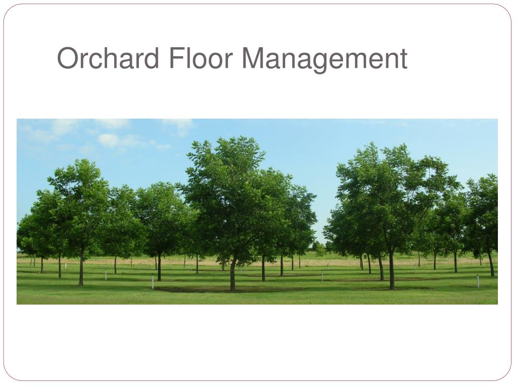 Orchard Floor Management