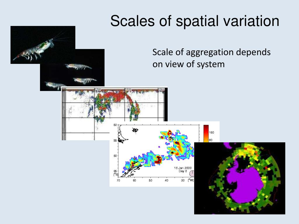 Scales of spatial variation