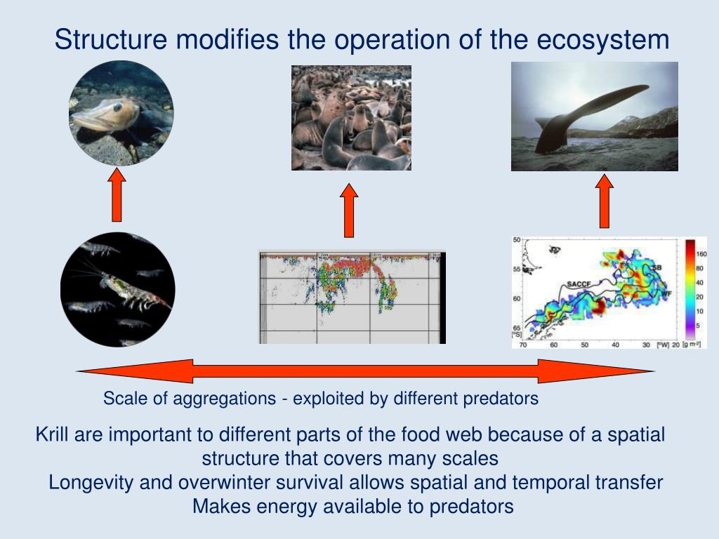 Structure modifies the operation of the ecosystem