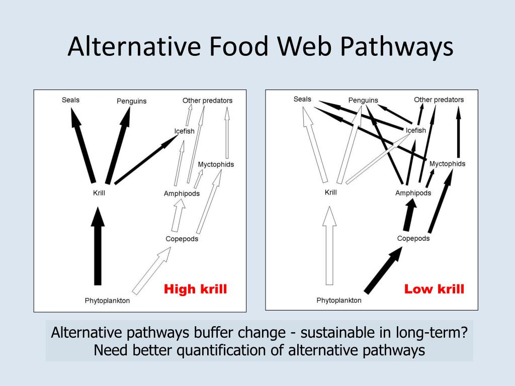 Alternative Food Web Pathways
