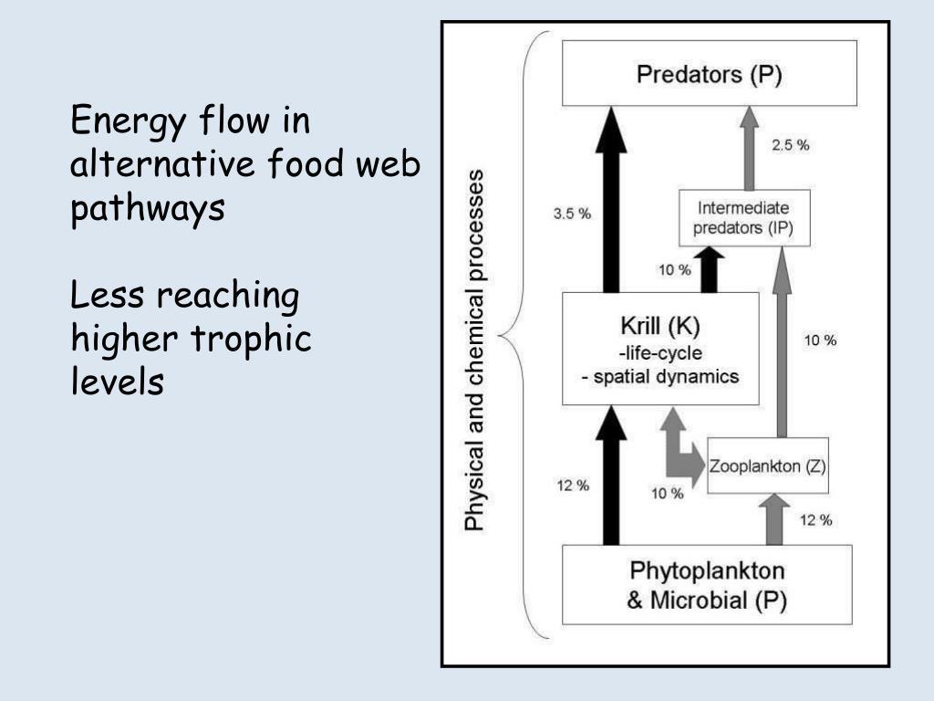 Energy flow in