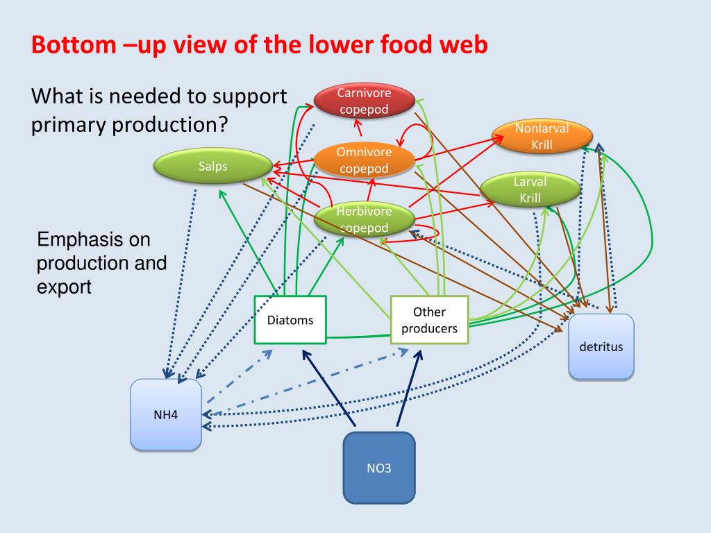 Bottom –up view of the lower food web