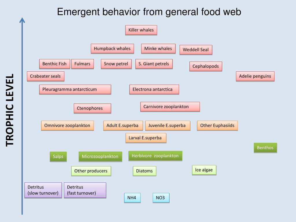 Emergent behavior from general food web