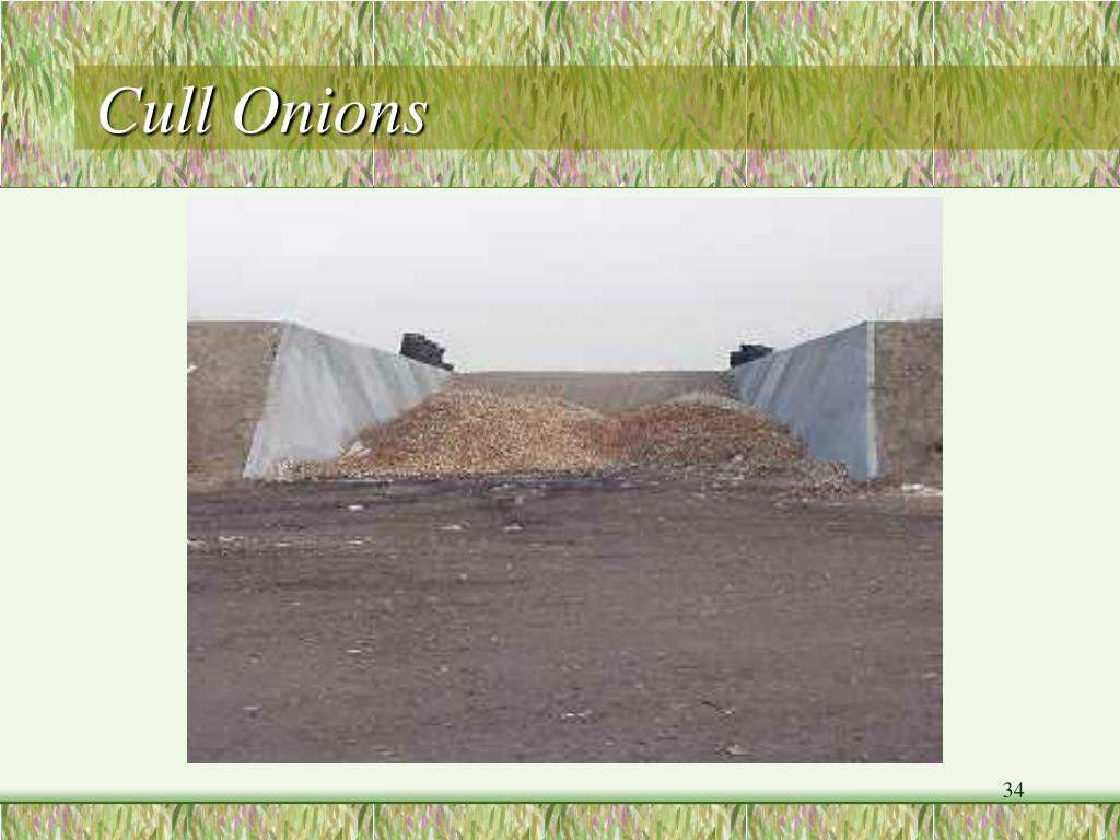 Cull Onions