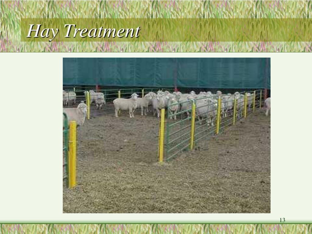 Hay Treatment