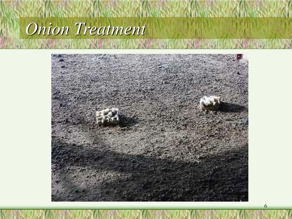 Onion Treatment