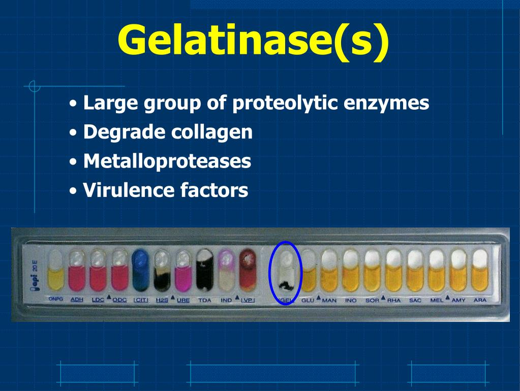 Gelatinase(s)