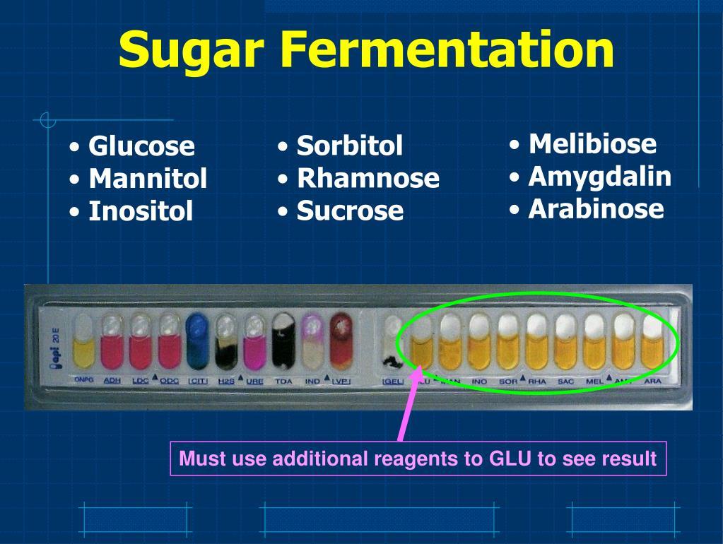 Sugar Fermentation