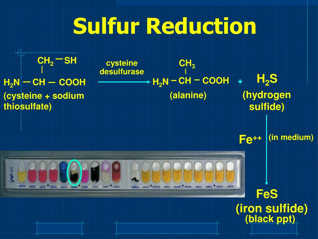 Sulfur Reduction