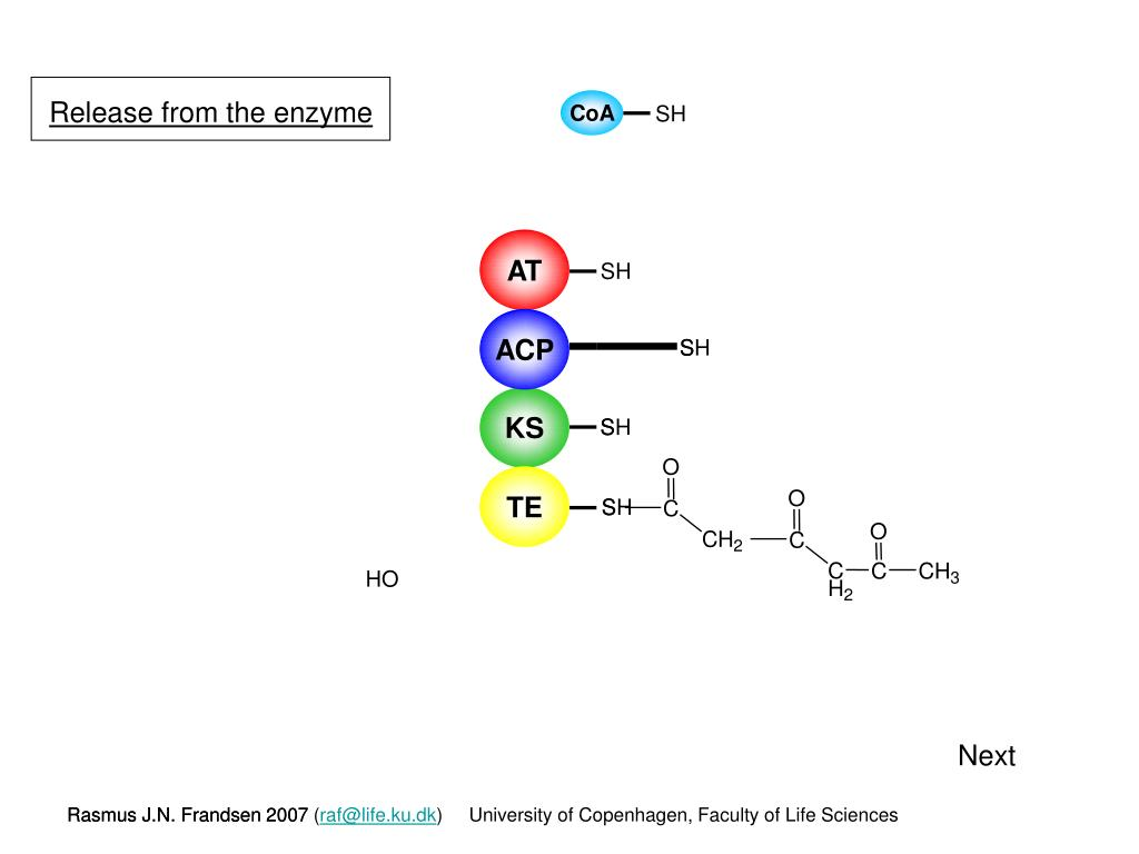 Release from the enzyme