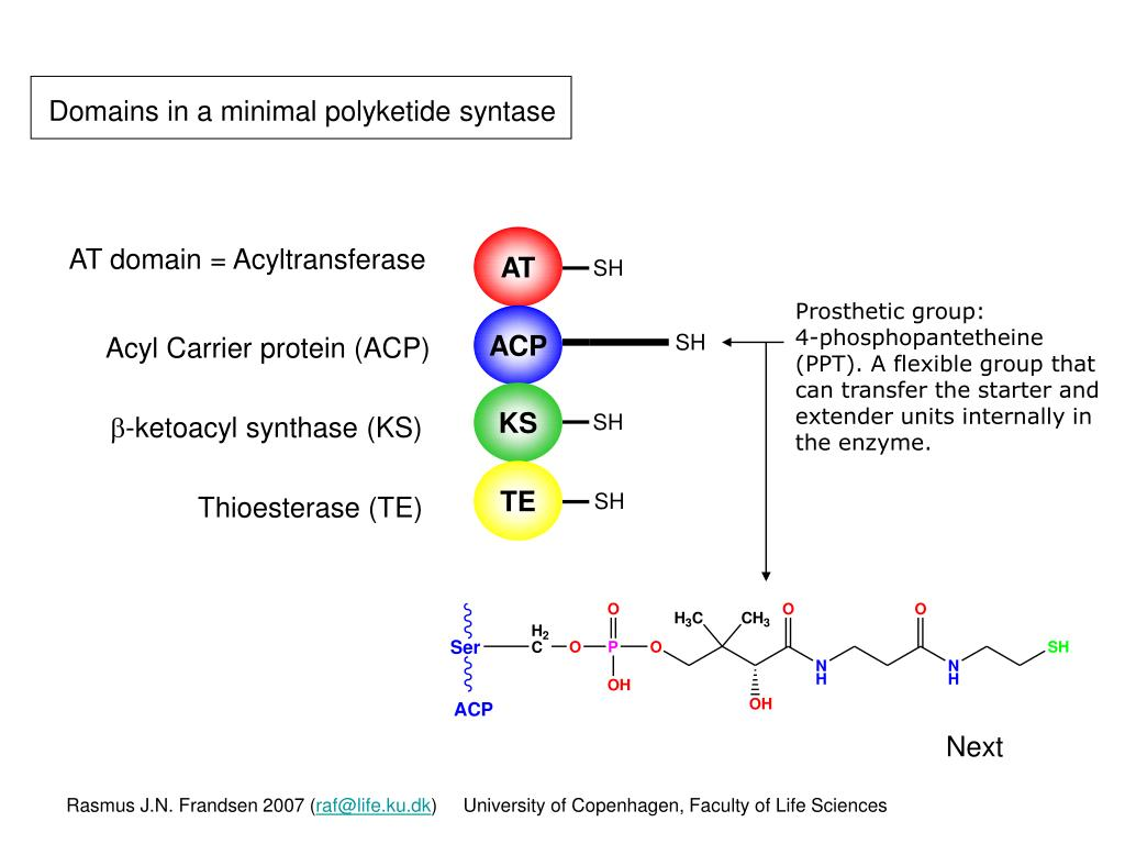 Domains in a minimal polyketide syntase