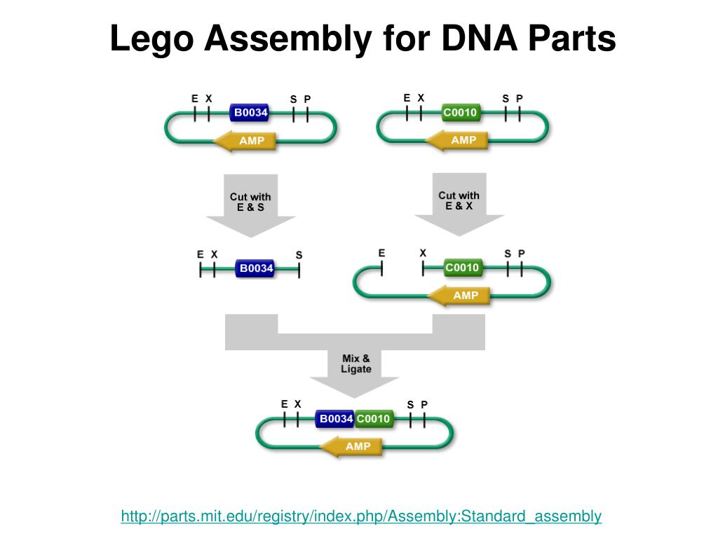 Lego Assembly for DNA Parts