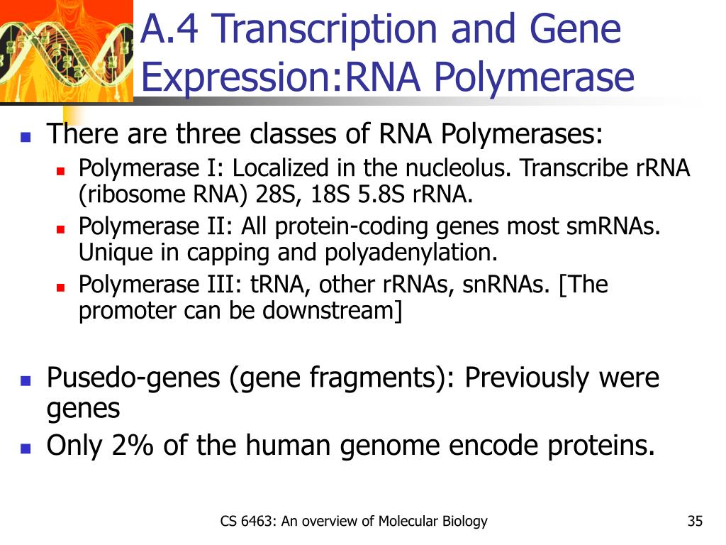 A.4 Transcription and Gene Expression:RNA Polymerase
