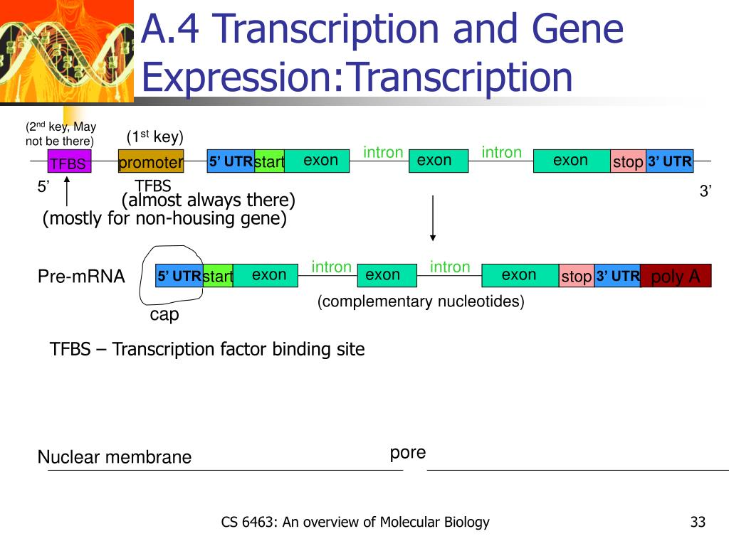 A.4 Transcription and Gene Expression:Transcription