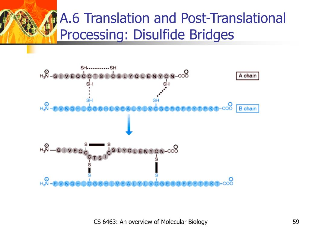 A.6 Translation and Post-Translational Processing: Disulfide Bridges