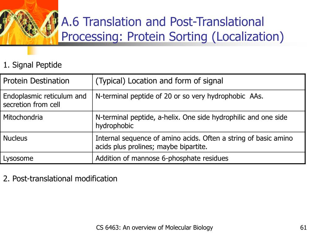A.6 Translation and Post-Translational Processing: Protein Sorting (Localization)