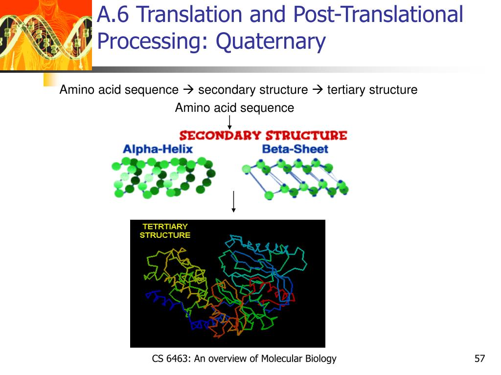 A.6 Translation and Post-Translational Processing: Quaternary