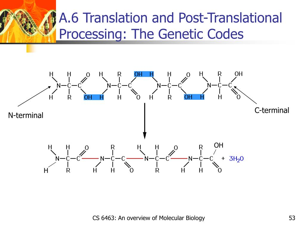 A.6 Translation and Post-Translational Processing: The Genetic Codes