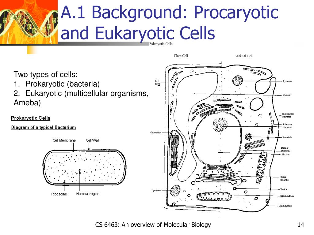 A.1 Background: Procaryotic and Eukaryotic Cells