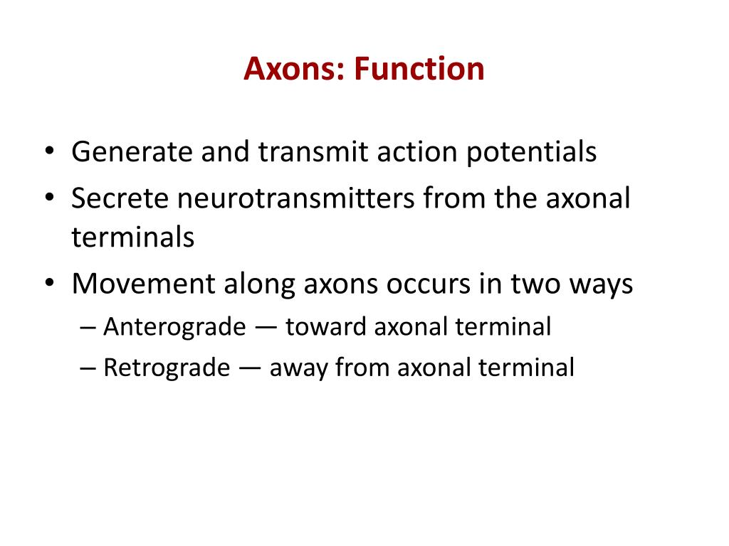 Axons: Function