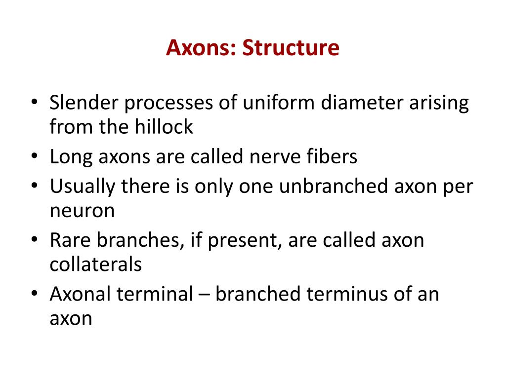 Axons: Structure