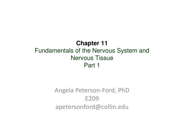 Chapter 11 fundamentals of the nervous system and nervous tissue part 1 l.jpg