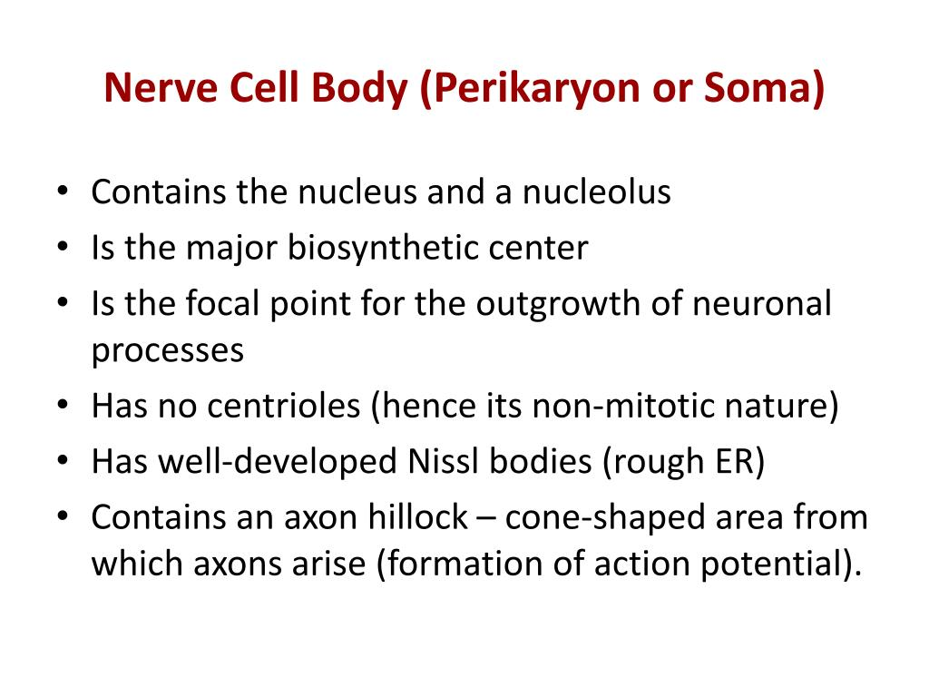 Nerve Cell Body (