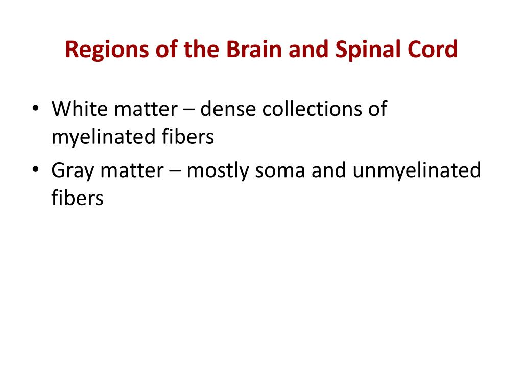 Regions of the Brain and Spinal Cord
