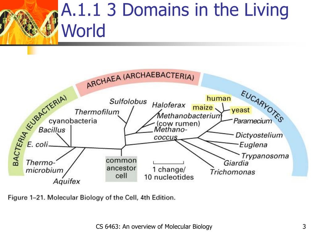 A.1.1 3 Domains in the Living World
